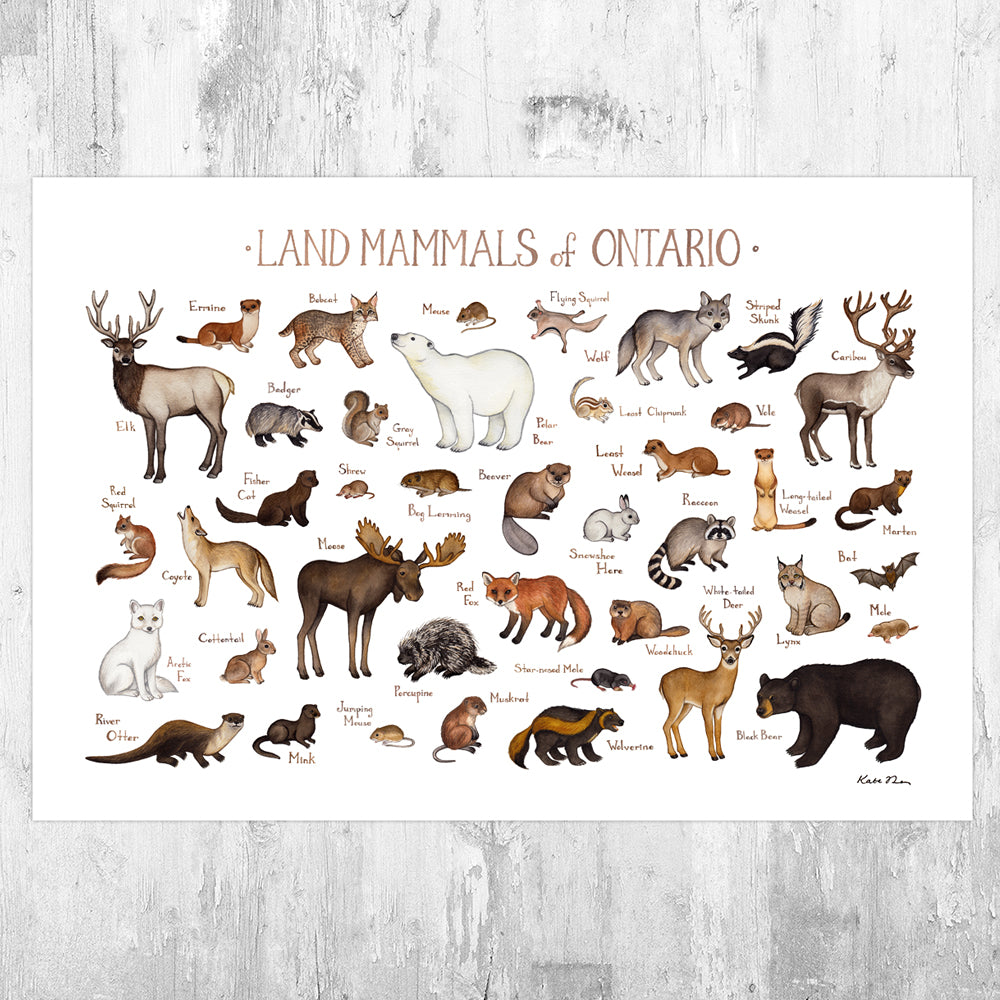 Ontario Land Mammals Field Guide Art Print