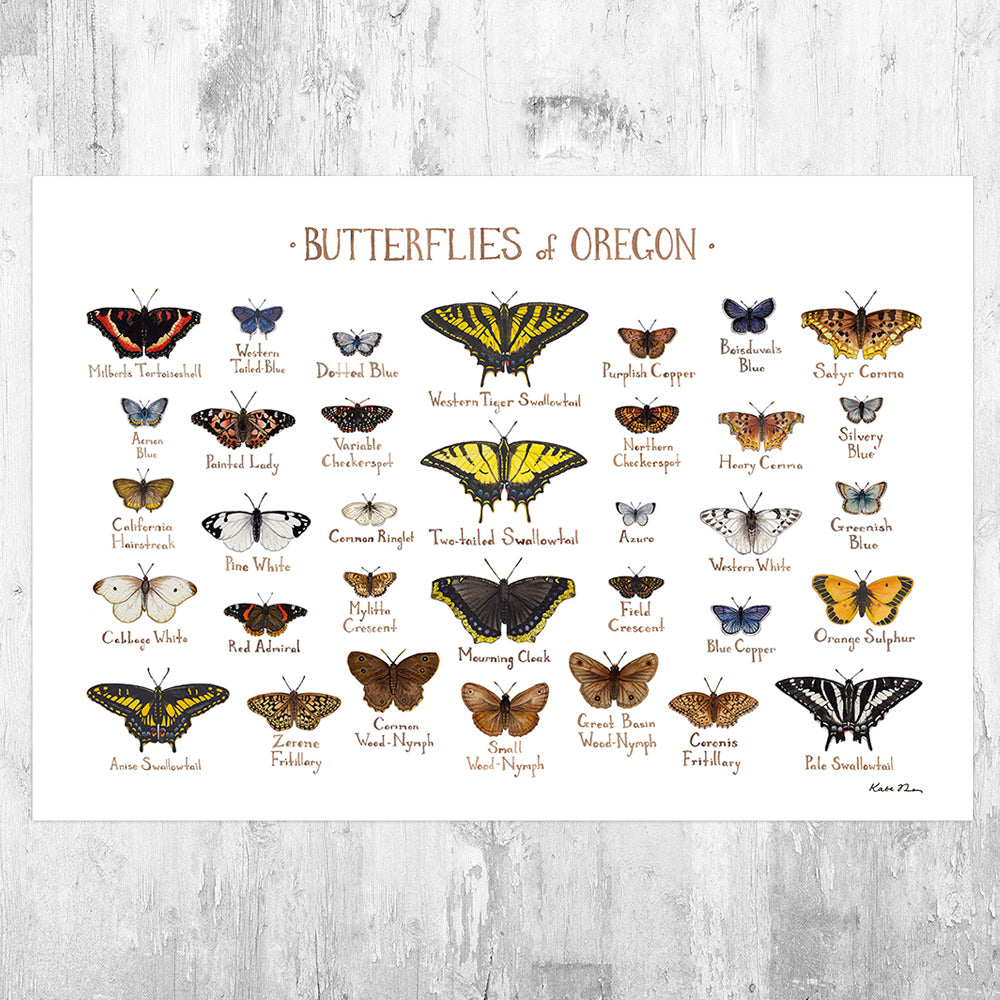 Oregon Butterflies Field Guide Art Print