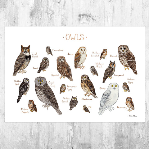 Owls of North America Field Guide Art Print
