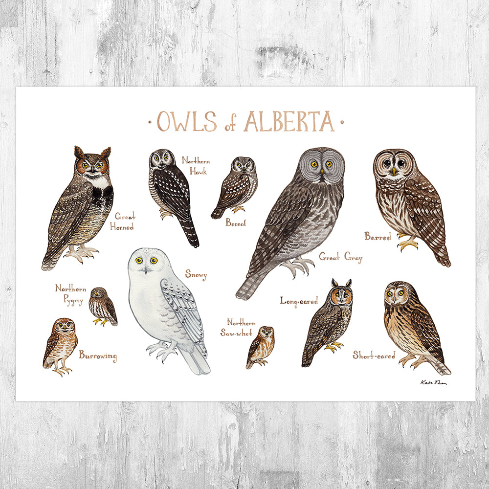 Alberta Owls Field Guide Art Print