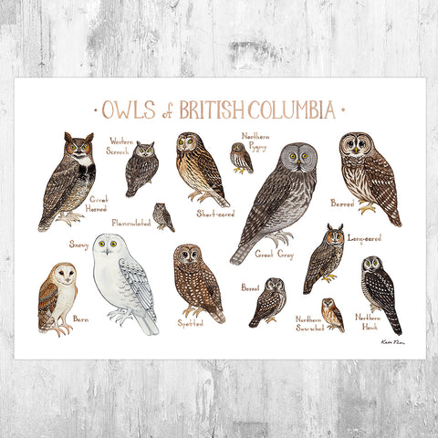 British Columbia Owls Field Guide Art Print