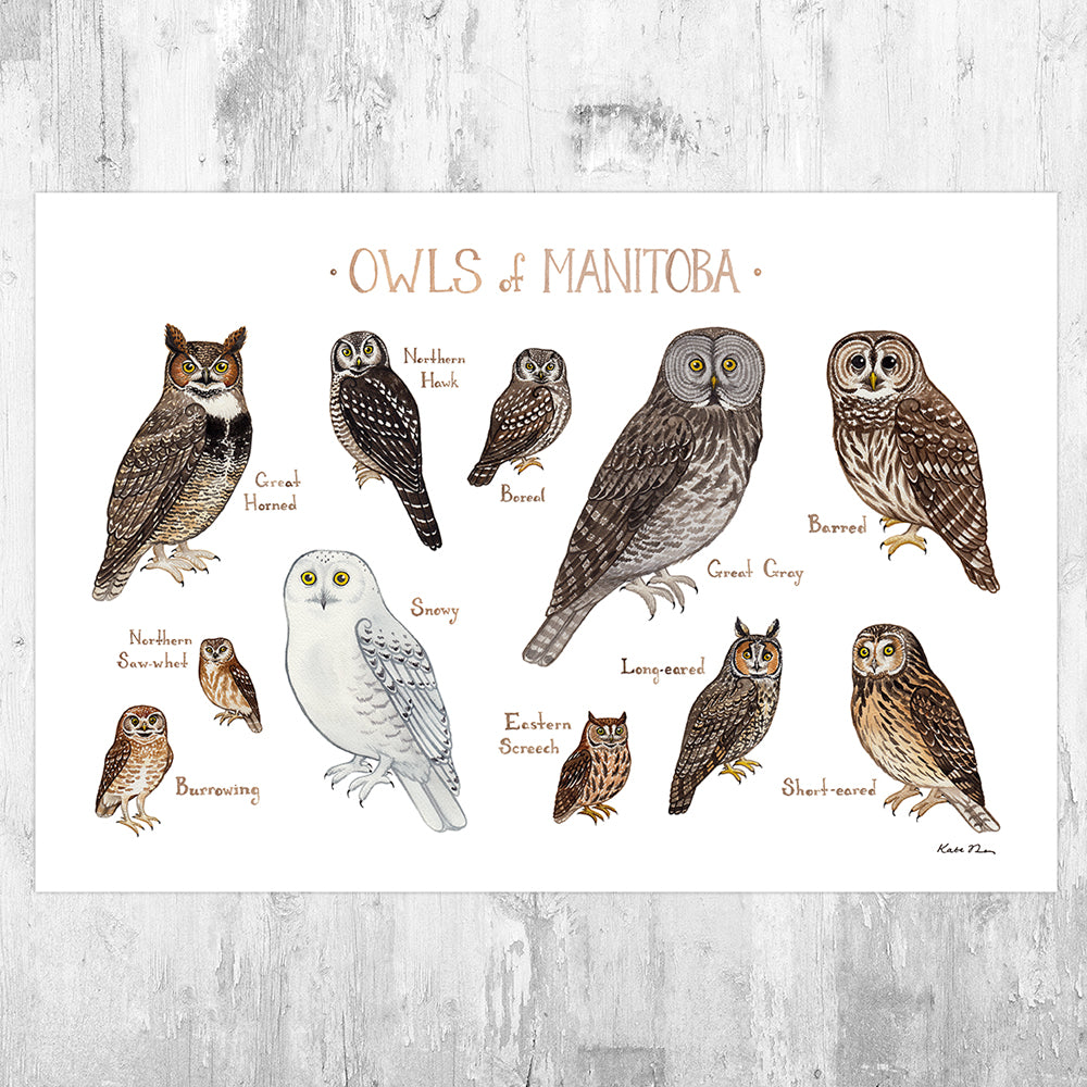 Manitoba Owls Field Guide Art Print