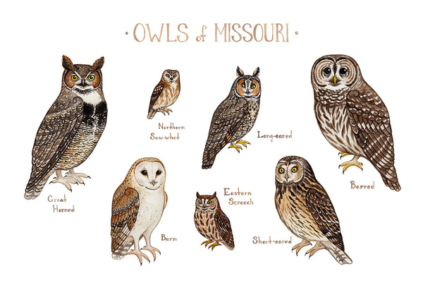 Wholesale Owls Field Guide Art Print: Missouri