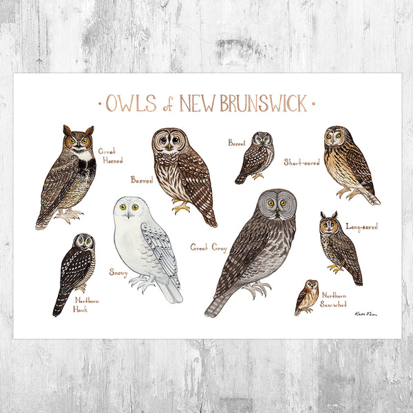 New Brunswick Owls Field Guide Art Print