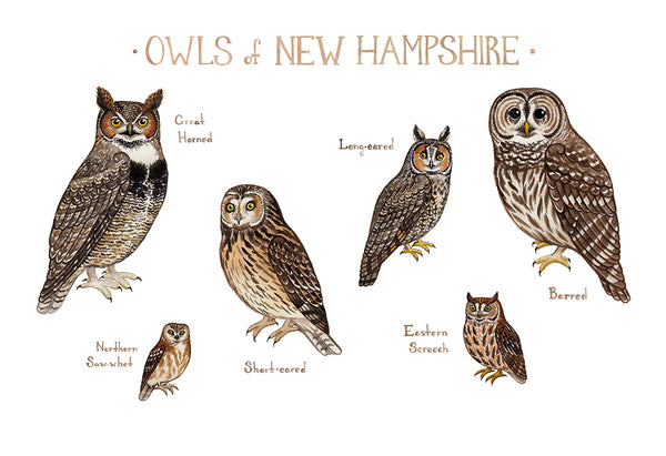 Wholesale Owls Field Guide Art Print: New Hampshire