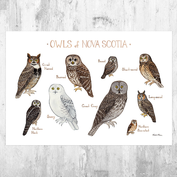 Nova Scotia Owls Field Guide Art Print
