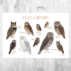 Ontario Owls Field Guide Art Print