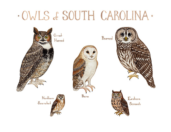 Wholesale Owls Field Guide Art Print: South Carolina
