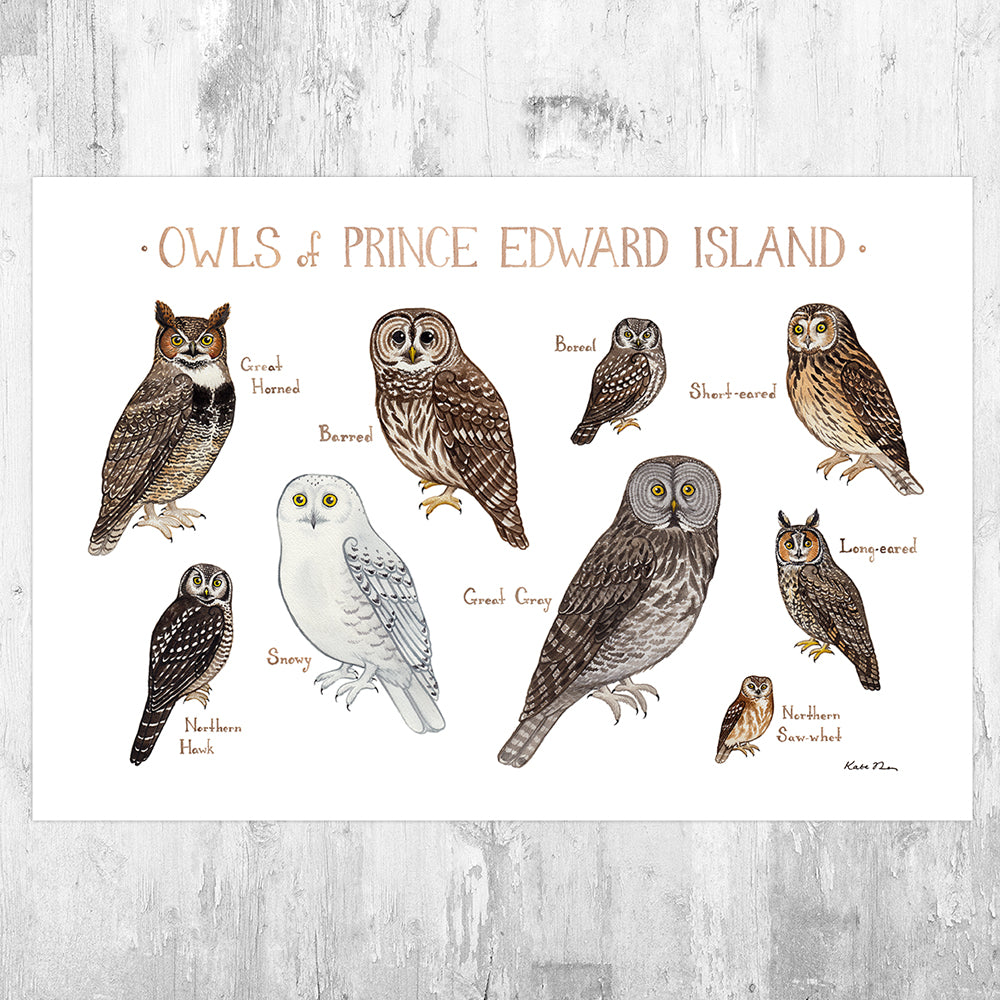 Prince Edward Island Owls Field Guide Art Print