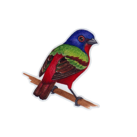 Painted Bunting Vinyl Sticker