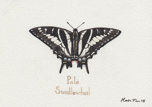 Pale Swallowtail Painting