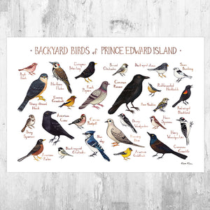 Prince Edward Island Backyard Birds Field Guide Art Print
