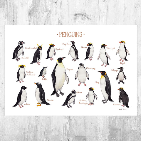 Penguins of the World Field Guide Art Print