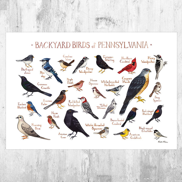 Pennsylvania Backyard Birds Field Guide Art Print