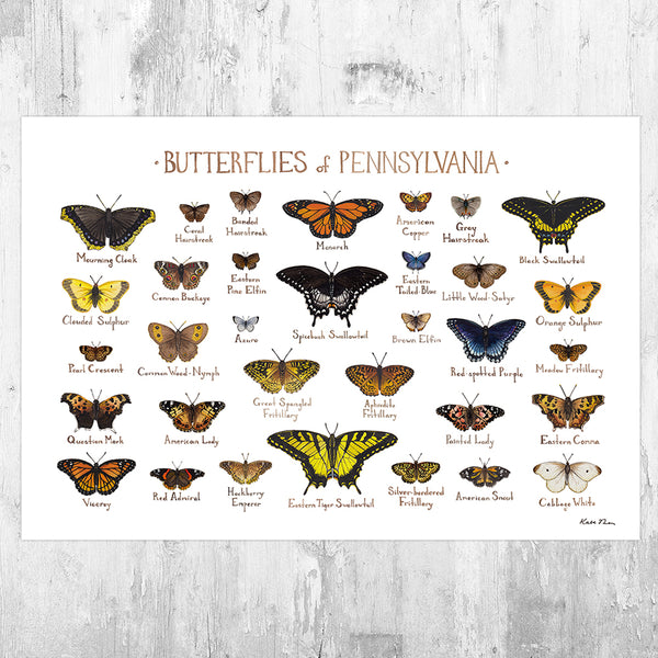 Pennsylvania Butterflies Field Guide Art Print