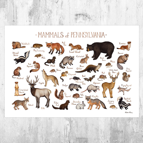 Pennsylvania Mammals Field Guide Art Print