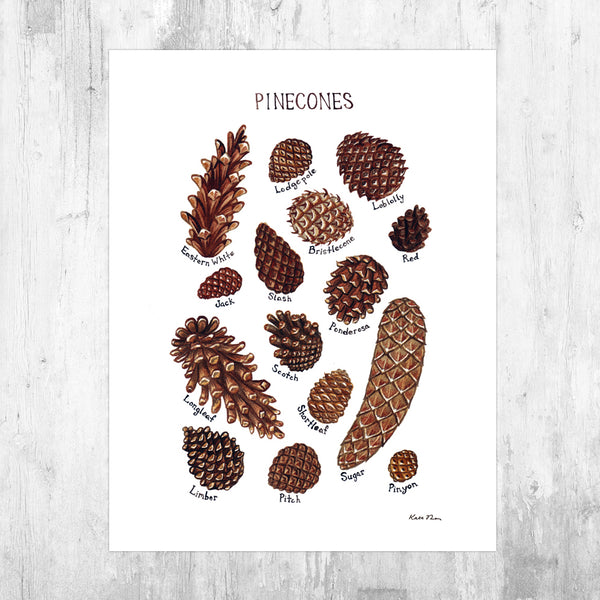 Pine Cones Field Guide Art Print