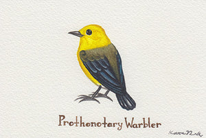Prothonotary Warbler Painting