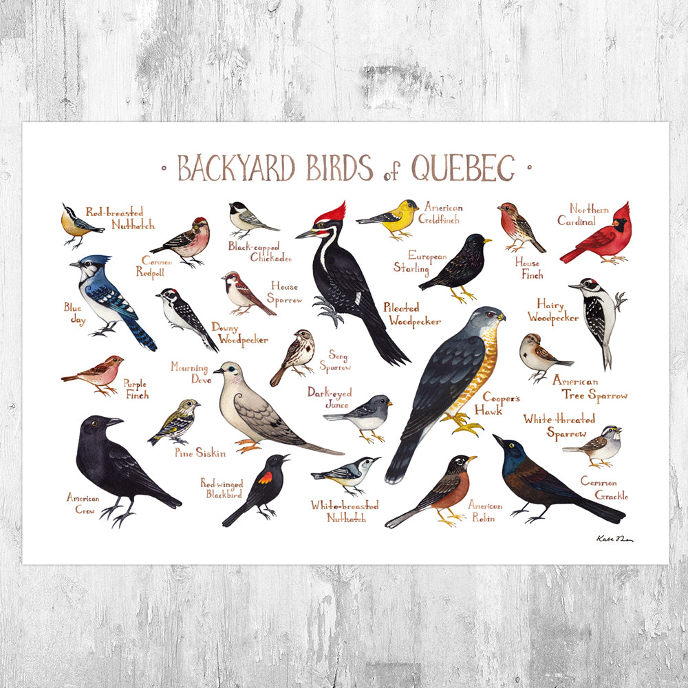 Quebec Backyard Birds Field Guide Art Print