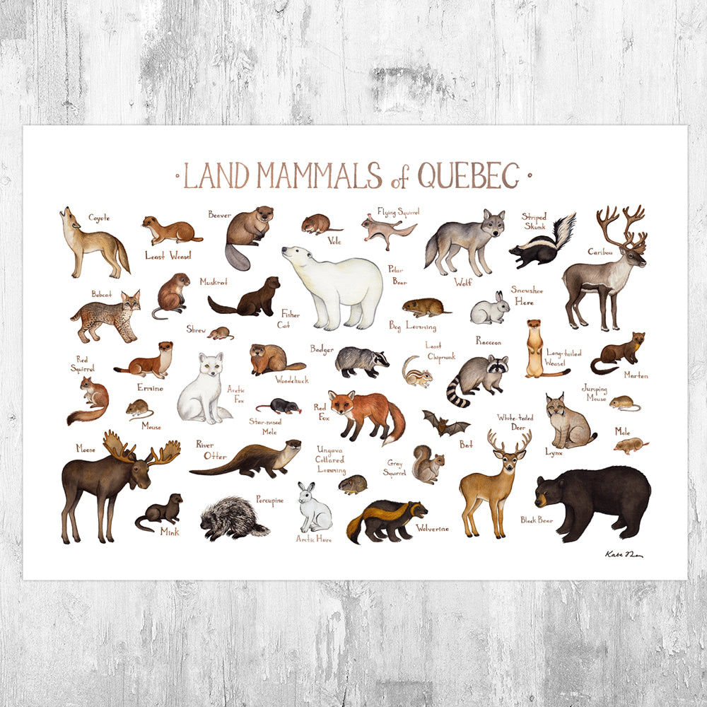 Quebec Land Mammals Field Guide Art Print