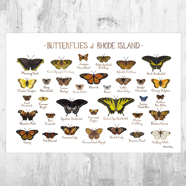 Rhode Island Butterflies Field Guide Art Print
