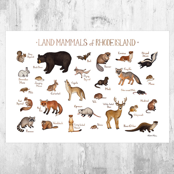 Rhode Island Land Mammals Field Guide Art Print