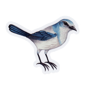 Florida Scrub Jay Vinyl Sticker