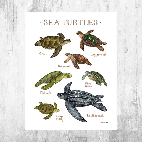 Sea Turtles Field Guide Art Print
