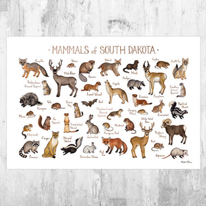 South Dakota Mammals Field Guide Art Print
