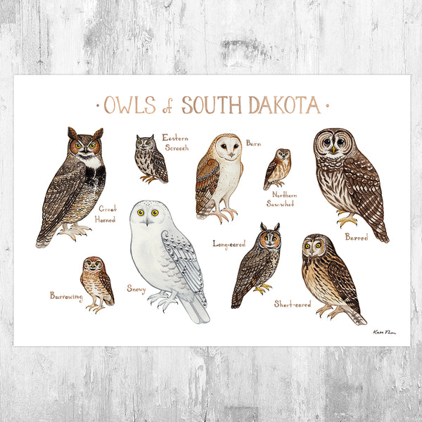 Wholesale Owls Field Guide Art Print: South Dakota