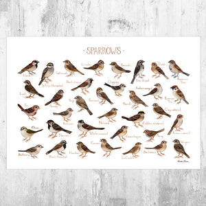 Sparrows of North America Field Guide Art Print