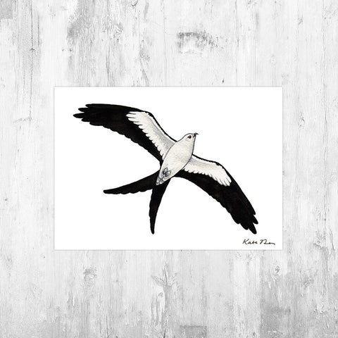 Swallow-tailed Kite in Flight Art Print