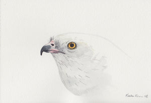 Swallow-tailed Kite Portrait Painting