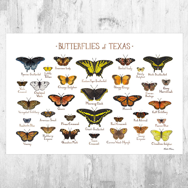 Texas Butterflies Field Guide Art Print