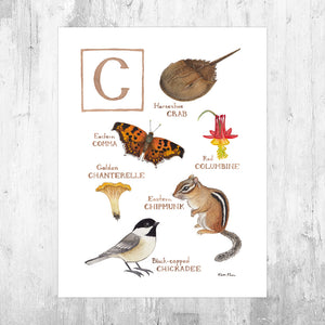 The Letter C Nature Art Print