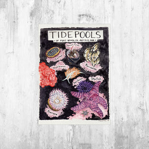 Nature Journal Tide Pools Art Print