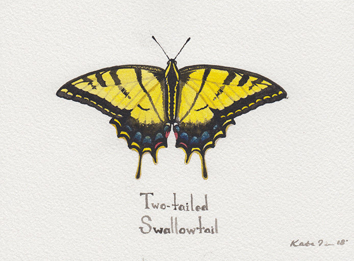 Two-tailed Swallowtail Painting