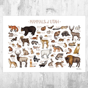 Utah Mammals Field Guide Art Print