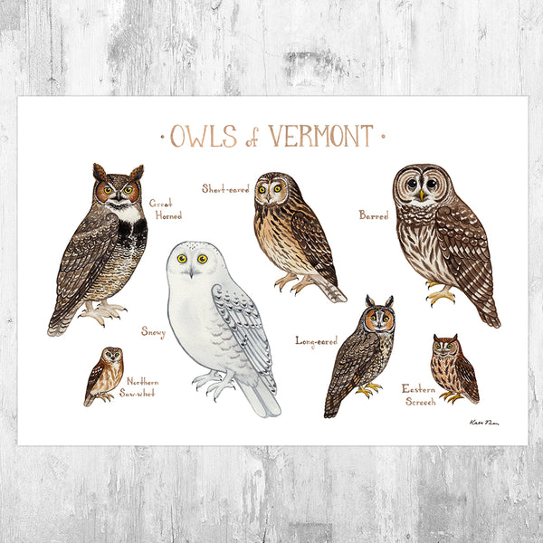Vermont Owls Field Guide Art Print