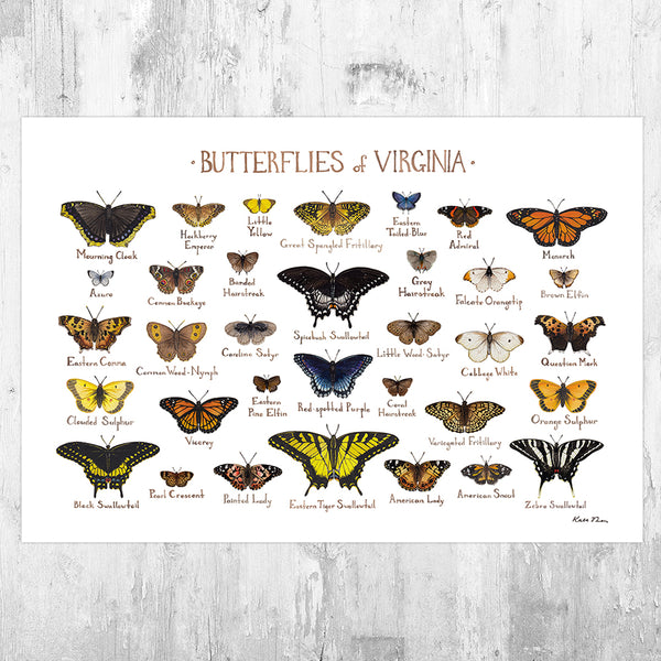 Virginia Butterflies Field Guide Art Print