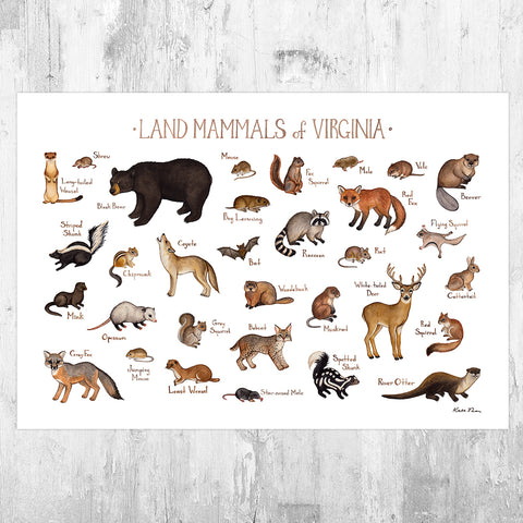 Virginia Land Mammals Field Guide Art Print