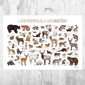 Washington Land Mammals Field Guide Art Print