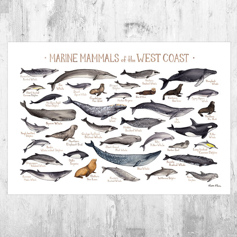 West Coast Marine Mammals Field Guide Art Print