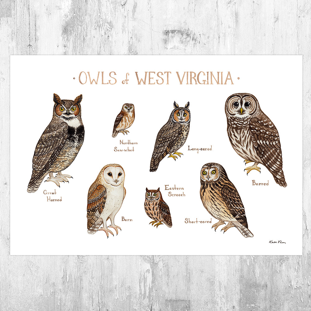 West Virginia Owls Field Guide Art Print