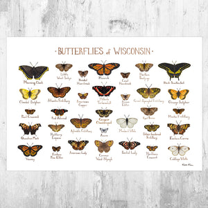 Wisconsin Butterflies Field Guide Art Print