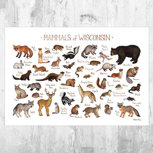 Wisconsin Mammals Field Guide Art Print