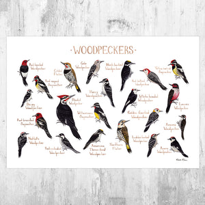 Woodpeckers of North America Field Guide Art Print