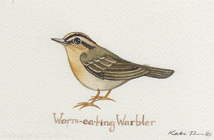 Worm-eating Warbler Painting