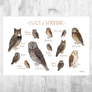 Wyoming Owls Field Guide Art Print