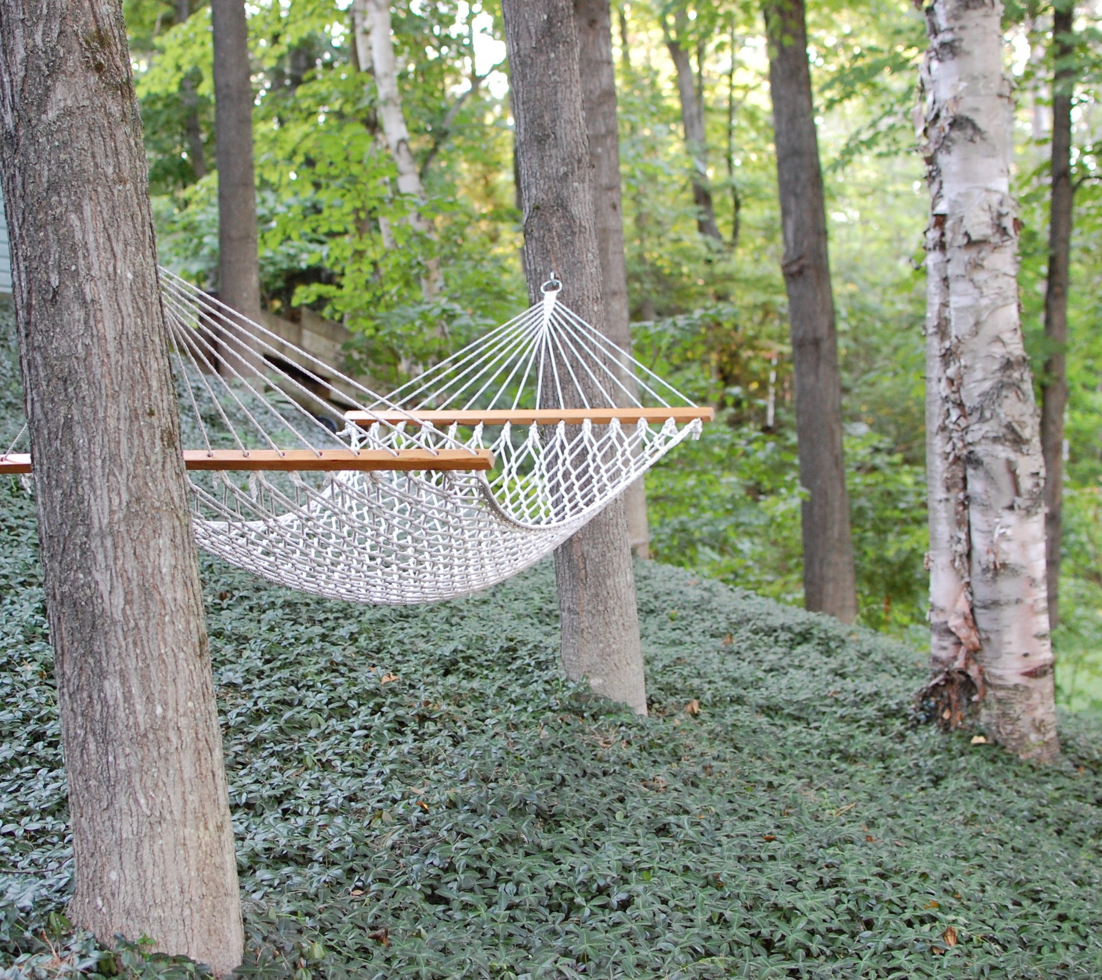 secret hammock in the woods
